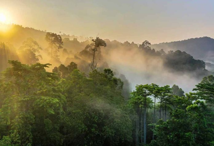 Fun Facts About Rainforests for Kids